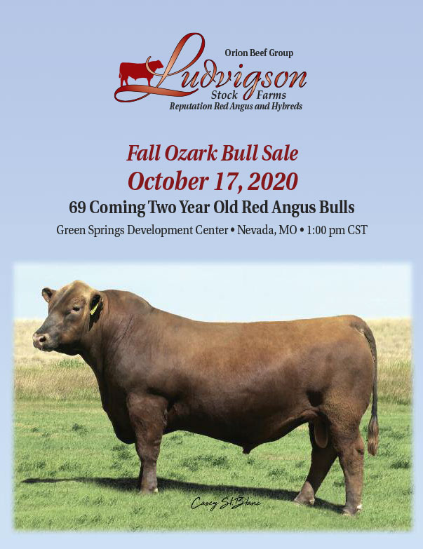 Ludvig Stock Farms Red Angus Spring Sale